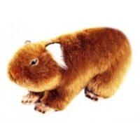 Tina- Wombat