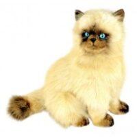 Toffee - Himalayan Cat