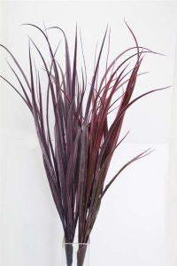 Large Burgundy Grass Bush