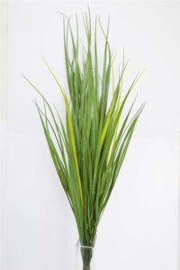 Murray RiverReed/Grass Dark green