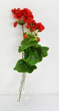 Geranium Bush x 2 Red