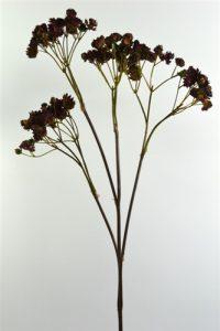 Gypsophilia Spray Burgundy
