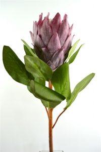 King Protea - Medium Pink