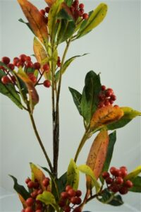 Berry Crenata Spray Orange Red