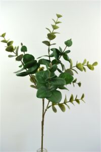 Eucalyptus Leaf Green
