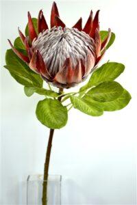 King Protea - Large Pink