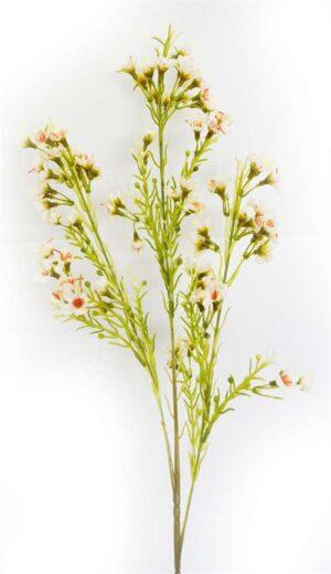 Geralton Wax Flower White