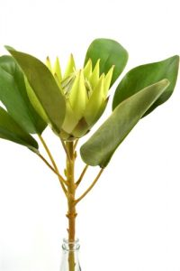 Small King Protea - White/Green