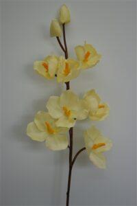 Single Vanda Orchid Spray Cream