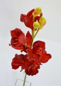 Cymbidium Orchid Red