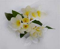 Frangipani Spray White