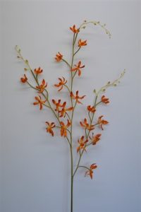 Dancing Orchid Spray Orange