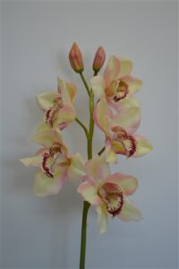 Cymbidium Real Touch Orchid Mauve