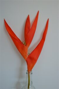 Heliconia Red/Orange