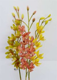 Cymbidium Spray Pink/Coral