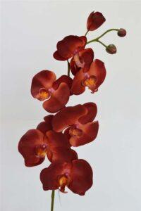 Phalaenopsis Spray Burgundy