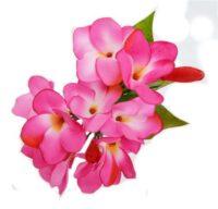 Frangipani Spray Pink