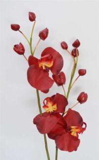 Phalaenopsis Spray Red