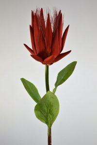 Corona Protea Red