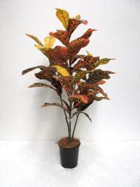 3' Croton Tree