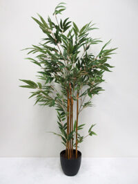 3' Potted Mini Bamboo Tree