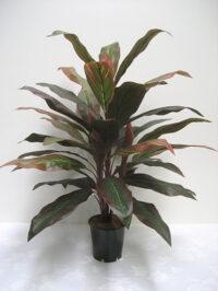 32'' Deluxe Cordyline Plant