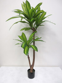 4' Potted Dracaena Fragrans Plant