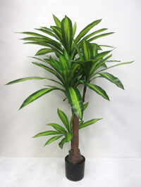 3.5' Potted Dracaena Fragrans Plant