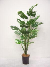 42'' Split Philo Plant