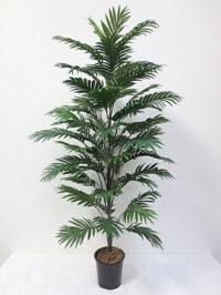 5' Areca Palm