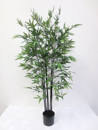 5' Mini Black Bamboo Tree