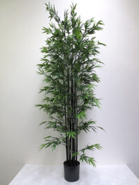 7' Mini Black Bamboo Tree