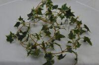 Medium Sage Ivy Garland Variegated - 180cm