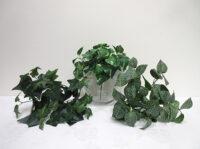 Small Greenery Bush